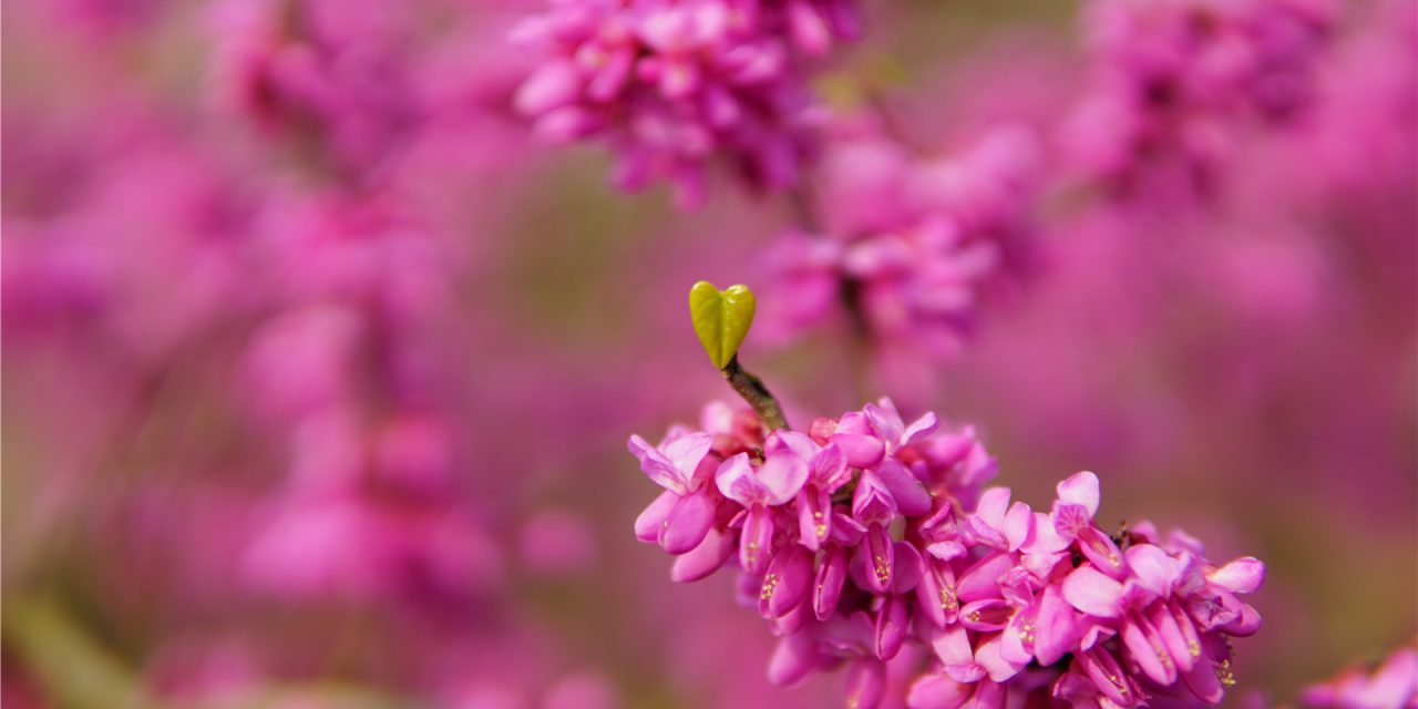 校园风光集锦之花卉(一)